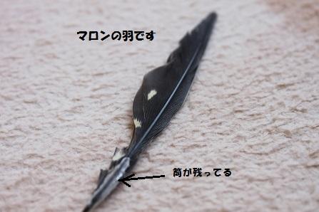 途中で切れた羽