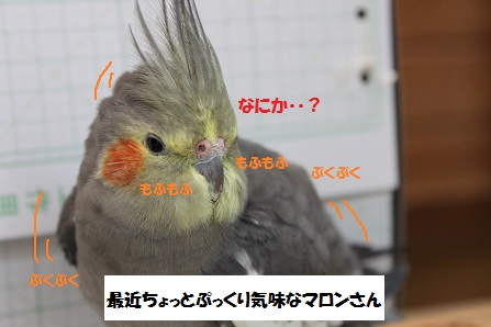 ぷっくりんこ~