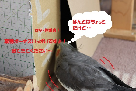 ほんとは・・?