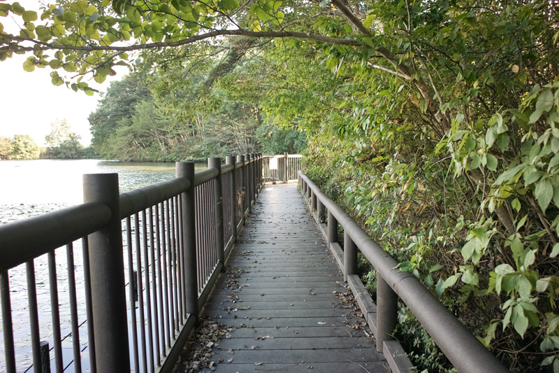 公園の桟橋