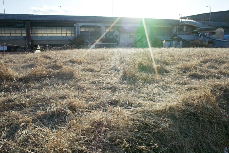 冬の草むら