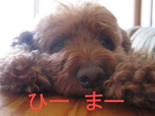 moco眠い