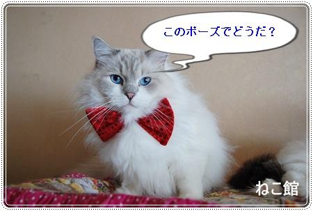blog5_20131225135651c41.jpg