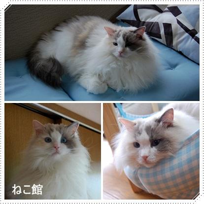 blog_20140103084226d73.jpg