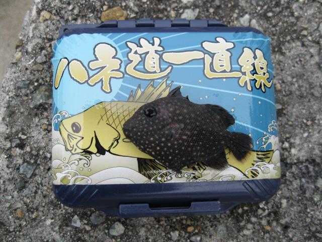 謎のお魚その2♪