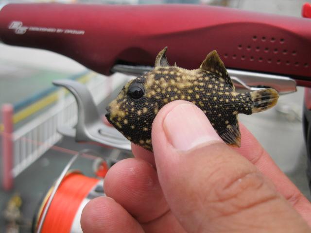 謎のお魚その3♪
