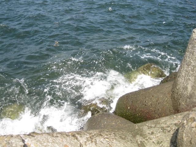 海が少し荒れはじめたので・・・