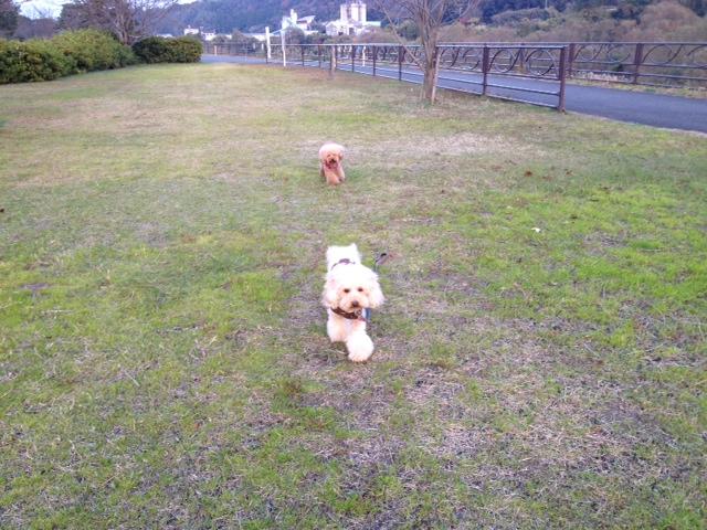 写真お散歩 1