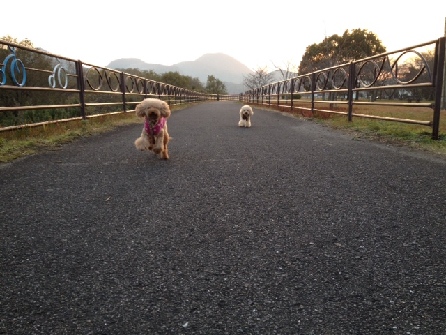 写真お散歩 4