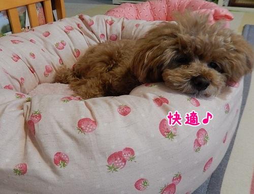 IMG_0172ねねベッド