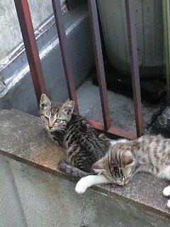 「おれたち、屋上の端っこで昼寝なんて器用だよな。」「でもあいつには負けるぜ。」