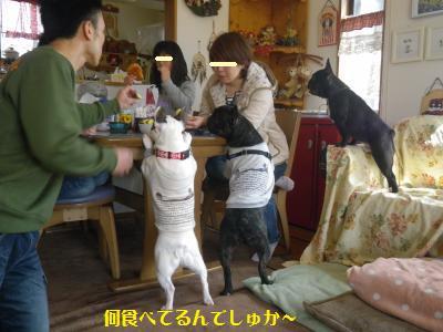 13_20110328221217.jpg