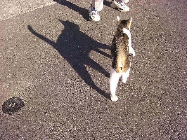 S森戸海岸の猫1