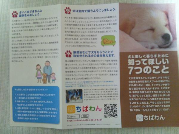 DSC_0031_convert_20120317231140.jpg