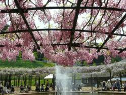 20110509藤公園~♪7