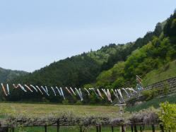 20110509藤公園~♪8