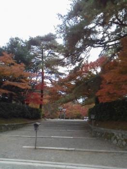 20131121紅葉~~~♪♪