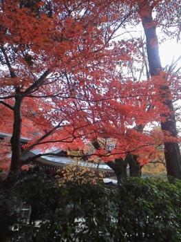 20131121紅葉~~~♪♪2