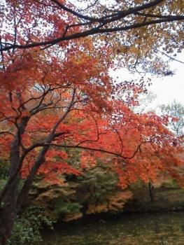 20131121紅葉~~~♪♪7