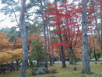 20131121紅葉~~~♪♪10
