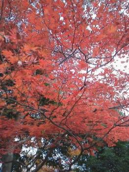 20131121紅葉~~~♪♪12