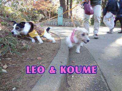 LEO & KOUME