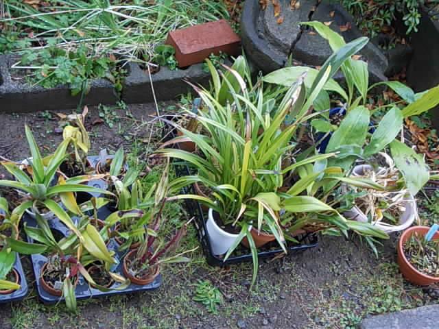 Orchids 20140108