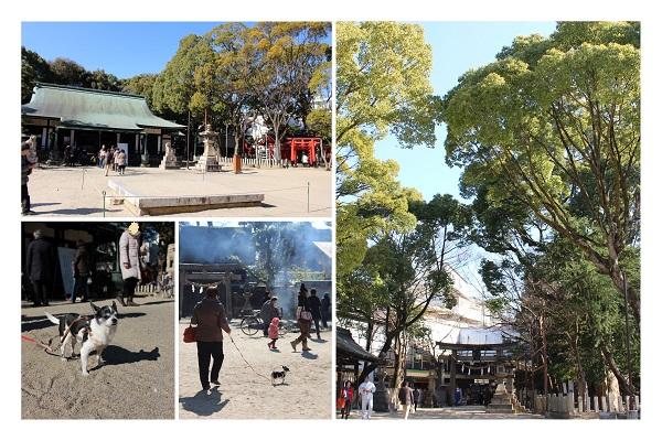 20140115原田神社どんど焼き-01