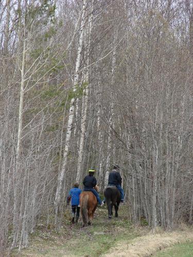 ridning i skogen