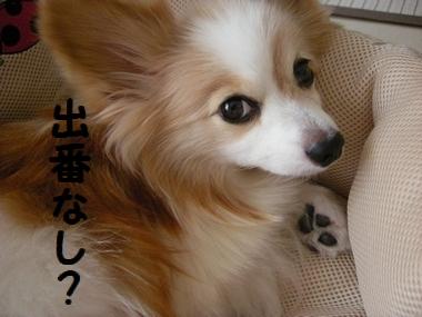 001_20100927193112.jpg