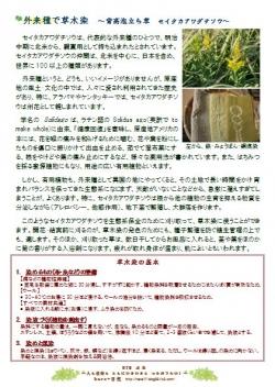 草木染資料2