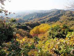 天園から鎌倉の眺め