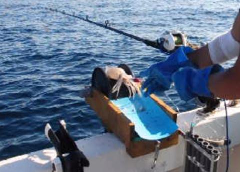 イカ釣り機1