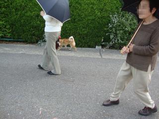 ゾロゾロ散歩