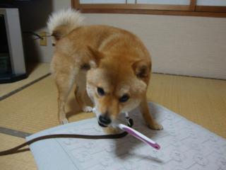 自ら歯磨き①