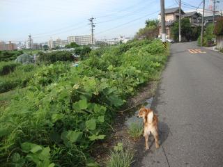 早朝散歩っぽ
