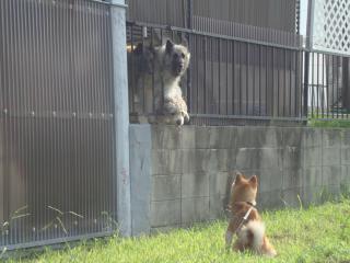 猛犬たち?