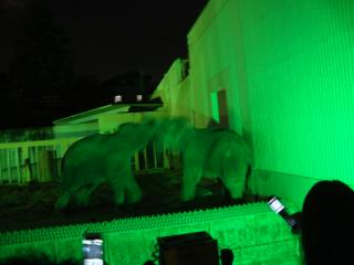 活発なゾウたち
