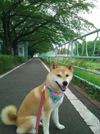 散歩したよ~
