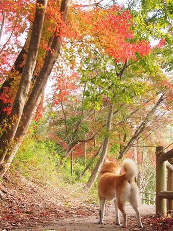 紅葉を見に行こう