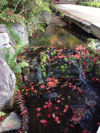 小川に落ち葉
