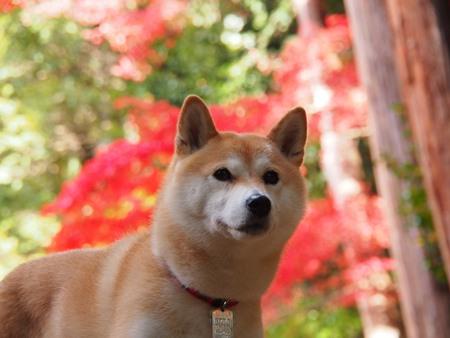 紅葉とさくら