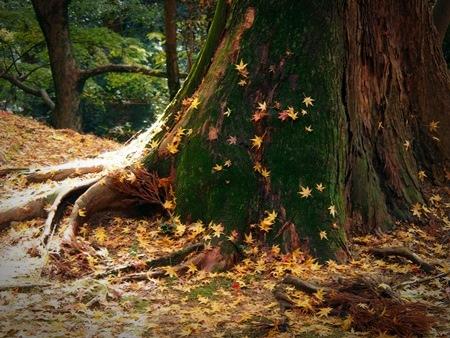 落ち葉の絵画♪
