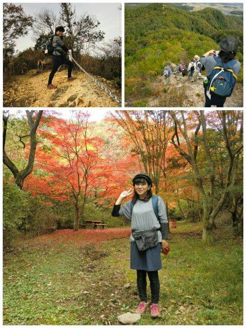 平成26年11月8日藤の木4