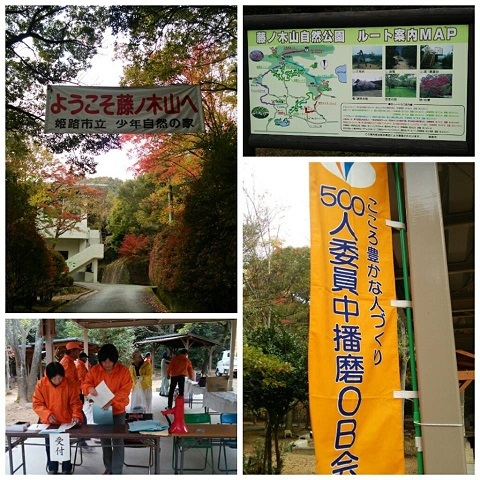 平成26年11月8日藤の木2