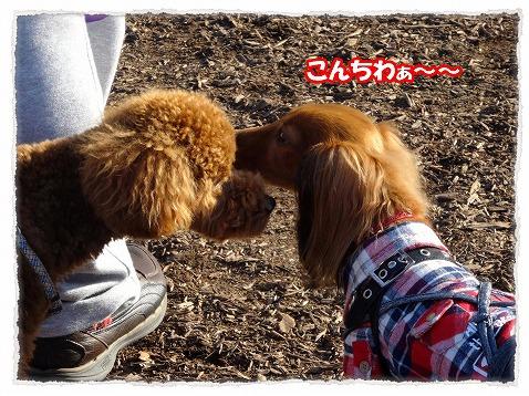 2013_11_21_2.jpg