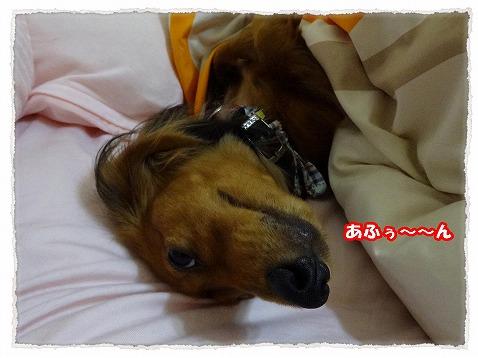 2013_11_22_3.jpg