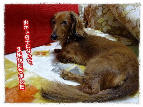 2013_12_14_1.jpg