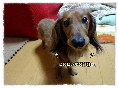 2013_12_27_1.jpg