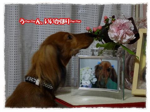 2013_12_7_1.jpg